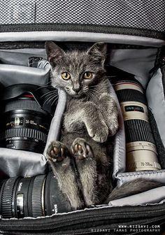 Die niedliche #Katze macht es sich in der Kameratasche bequem #suess #Tiere <3 stylefruits Inspiration <3