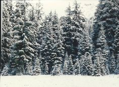 1993, near Crater Lake, it had rained all the way the previous day and it had snowed here.  i am glad i decided to see Crater Lake again.  this was a winter wonderland!  beautiful.  it was sorta not fun to drive on the road though.  OR