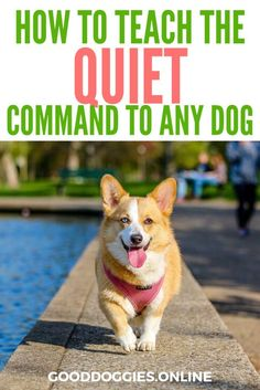 If you're tired of your dog barking, try teacing the quiet command. It's the best way to stop dog barking. #dogs #dogtraining #barking