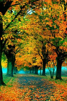 Fall photograph autumn leaves nature di CarlChristensen