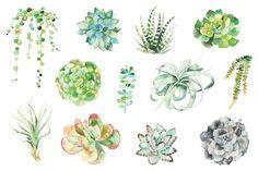 watercolor succulent set - Illustrations