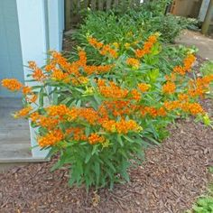 Herbaceous Perennials, Flowers Perennials, Planting Flowers, Garden Shrubs, Garden Plants, Garden Art, Garden Ideas, Bucket Gardening, Flowering Bushes