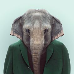 ZOO PORTRAITS by Yago Partal — ELEPHANT by Yago Partal for ZOO PORTRAITS
