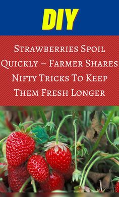 Storing Strawberries, Container Gardening, Gardening Tips, Food Shelf Life, Veg Garden, Useful Life Hacks, Food Facts, Strawberry Recipes, Diy Hacks