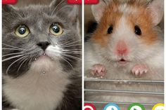 Funny pet apps: My Talking Pet app -- we couldn't stop laughing when we tested this out with our own animals.
