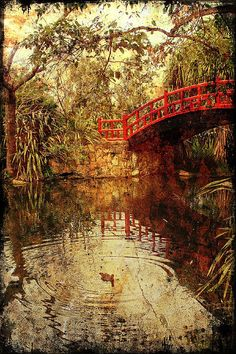 Wollongong Botanic Gardens by Vanessa Pike-Russell, via Flickr