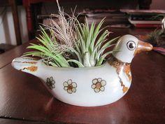 Mexican pottery dove planter