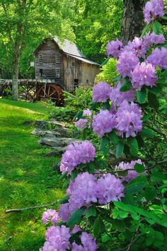 Glade Creek Grist Mill at Babcock St Park, West Virginia. Photo by Ed Rehbein. Love the gorgeous purple flowers and lush greenery