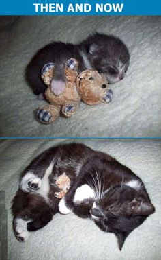 Then and now! * The toy looks so tiny, being kitty-hugged