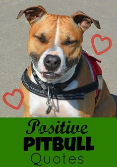 Everyone could use some positive pitbull quotes in their life right? Even if you are a lover of pitties, these positive quotes will make your heart swell! Perros Pit Bull, Pitbulls, Love Dogs, Big Dogs, 1. Tag, Dog Store, Best Dog Breeds, Pit Bull Love, Dog Quotes