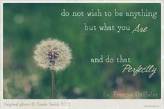 inspirational wish quotes photo art dandelion