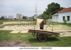 Hanoi, Vietnam, June 21, 2015: arrowroot vermicelli- a special Vietnamese noodles are being dried on bamboo fences going along the roads in Cu Da Village ( one Old village in Hanoi)