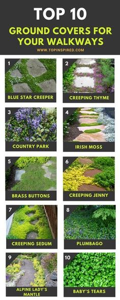 Garden Planning Awesome Tough groundcover ideas that won't get washed away - TOP 10 Plants and Ground Cover for Your Paths and Walkways Garden Yard Ideas, Garden Paths, Lawn And Garden, Garden Projects, Pool Garden, Landscape Design, Garden Design, Unique Garden, Ground Cover Plants