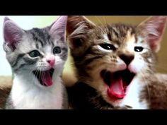 Os gatos também bocejam  - http://www.jacaesta.com/os-gatos-tambem-bocejam/