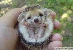photos animaux mignons - Recherche Google