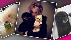 Kelly Osbourne Slammed Animal Rights Dogs Mom Sharon Osbourne Rescued