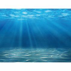 Fish Background, Background Images, Nature Pictures, Beautiful Pictures, Ocean Pictures, Blue Pictures, Aquarium Aquascape, Ocean Aquarium, Ocean Underwater