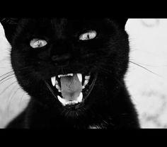 Cats W & B