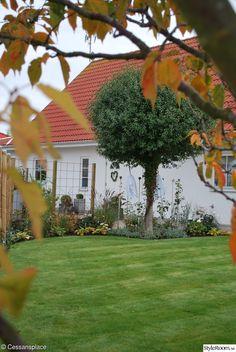 höst,trädgård,halloween,spöke,gräsmatta