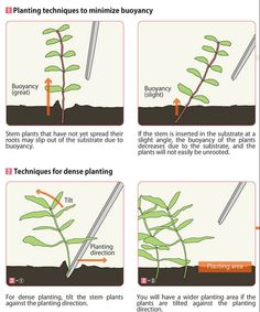 Planting techniques