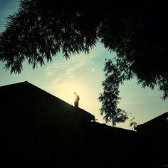Siempre soy lo que elijo ser pero no siempre quien quiero ser. | #Vida #Frases
