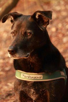 Hund Ferdinand