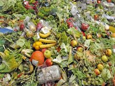 5 Ways to Stop Food Waste in Our Homes and Communities | Small Footprint Family
