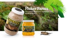 Fluker's Cricket Farm – Buy Crickets Online, Reptile Food, and More