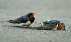 Read the story. Truly sad and beautiful.   His Eye Is On The Sparrow, via Flickr