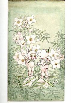 Illustrations   May Gibbs\' Nutcote