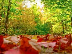 The leaves are beautiful this time of year in #Wisconsin! #LeafPeeping (via: @dcbackpacker)