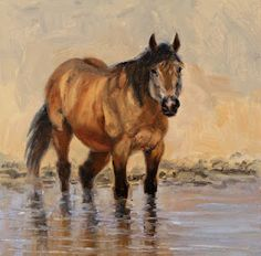 """Sand Wash Basin Wild Horses   Wild Horses, Portraits of Freedom"""". This is """"Bugs"""" from the Sand Wash ..."""
