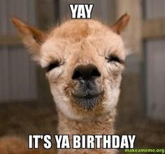 Yay Birthday Meme / Ecards are typically sent by email via an ecard platform.