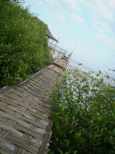 Mangrove eco-tourism, Surabaya  pict courtesy of Kumara