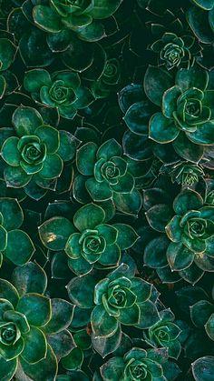 Rosenquarz Pantone-Hintergrund der iPhone Tapetenruhe Rose quartz Pantone background of the iPhone wallpaper calm Dark Green Aesthetic, Plant Aesthetic, Nature Aesthetic, Aesthetic Colors, Aesthetic Outfit, Green Aesthetic Tumblr, Aesthetic Drawing, Iphone Wallpaper Calm, Chevron Phone Wallpapers