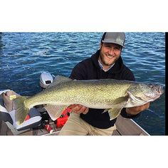 (via targetwalleye.com): @koryjohnston_fishing was jigging blade baits on Lower Niagara and caught this super long 34.5 inch walleye that weighed in at a slender 10.3 pounds. _______________________________________ #TargetWalleye #WalleyeNuts #GravelLizard #walleye #fishing #niagarariver #bladebaits _______________________________________  TargetWalleye.com is a 2X weekly smattering of what's hot in the Walleye and Ice fishing worlds delivered straight to your inbox. Sign up for the #FREE…