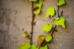 amydalephoto.com - engagement ring. memphis wedding photographer. botanic gardens. #wedding