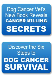 Cancer Is The #1 Killer Of All Dogs. 1 In 3 Dogs Gets Cancer.  Why Haven't More Dog Lovers Who Have Dogs  with Cancer Been Told THESE FACTS?      The Body Fights Off Cancer Naturally…