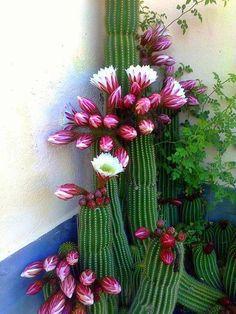 exuberancia de flores