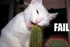 Amazing Animal Fail