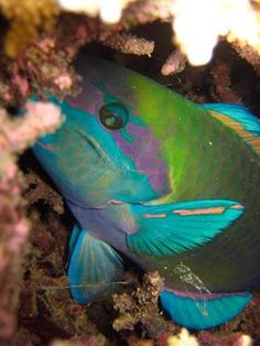 fonds sous-marins à ifaty Madagascar avec atimoo plongée et l'hôtel IKOTEL à Ifaty www.ikotel-tulear.com