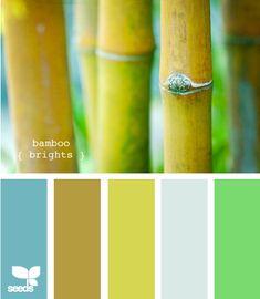 bamboo brights