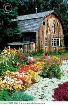 .not sure if it is the barn or the flowers.
