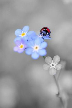 Forget me not, Miss Ladybug!