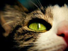 10 great tips to make pet photos | Your Pets Blog