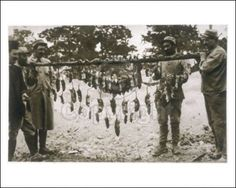 Rats made it very uncomfortable for soldiers to stay in trenches. They never used them as a source of food. They just hung them up cause they had no where else to put them. Rats came when soldiers had died, and they needed food so they would eat the person next to you or even you. They would eat anyone even if you were alive.