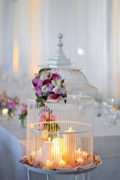 Birdcage obsessed!