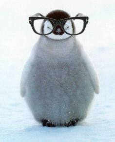 As much as it was a fad, the Penguins were the only ones that legitimately had a case to use it.