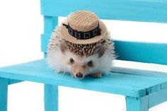16 Fun Facts About Hedgehogs | Mental Floss #Some funny things I didn't know! If you're an owner, you should check it out :-) #Hedgehog #FunFacts