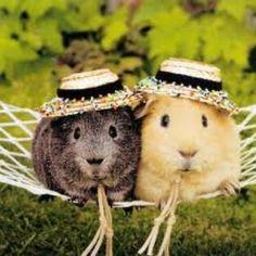 I miss my guinea pig :(